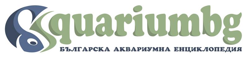 Участник: Диляна Динкова nutty