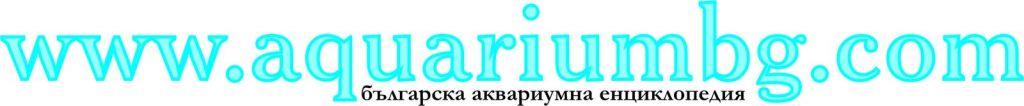 Участник: Стоян Чайков