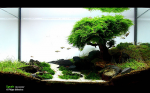 3-years-of-Aquascaping-by-FAAO-16.jpg