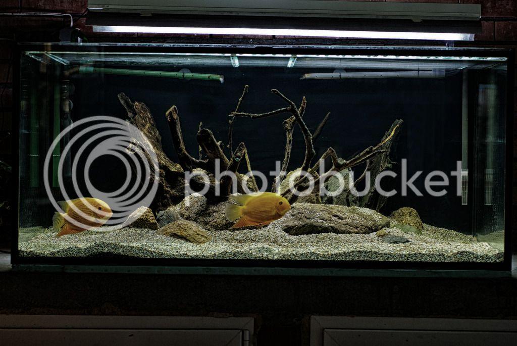 https://aquariumbg.com/forum/proxy.php?request=http%3A%2F%2Fi629.photobucket.com%2Falbums%2Fuu14%2Fogogogo_photo%2FDSC00917.jpg&hash=5e6f8e3930edea9e1c281b4728a9ff8b9540a83b