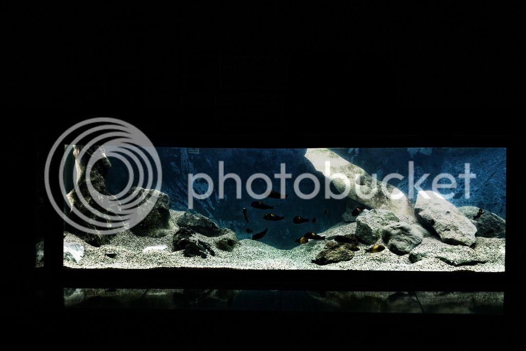 https://aquariumbg.com/forum/proxy.php?request=http%3A%2F%2Fi629.photobucket.com%2Falbums%2Fuu14%2Fogogogo_photo%2FDSC03599%2520copy.jpg&hash=cf9149f59ad0c0a14d02f23bce05f7480b65a402