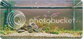 https://aquariumbg.com/forum/proxy.php?request=http%3A%2F%2Fi8.photobucket.com%2Falbums%2Fa48%2Fh0stage%2F1231-1.jpg&hash=3ebdc6eba81d20551df15dac7fc17ea2d362a84a