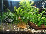 https://aquariumbg.com/forum/proxy.php?request=http%3A%2F%2Fi886.photobucket.com%2Falbums%2Fac62%2Fhajigeo%2Fshrimps%2Fth_IMG_1888.jpg&hash=e8ea2013a652aa34b3a65bbaacad230261374184