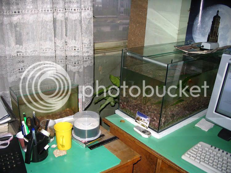 https://aquariumbg.com/forum/proxy.php?request=http%3A%2F%2Fi89.photobucket.com%2Falbums%2Fk204%2Fastrofag%2Fribok%2Fima7.jpg&hash=0fd8e38236a83b33b9b4874e58a8629eec464780