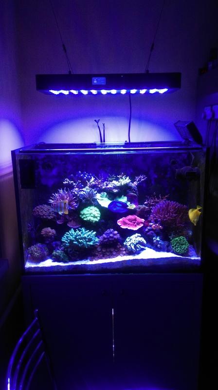 https://aquariumbg.com/forum/proxy.php?request=http%3A%2F%2Fs1.postimg.cc%2Fwnzluldi7%2FIMAG0290.jpg&hash=1b29f996e7a8d42df6b0961e3a1d24474945b1ef