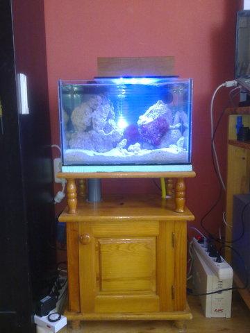 https://aquariumbg.com/forum/proxy.php?request=http%3A%2F%2Fs12.postimg.cc%2Fjvpf9ssyl%2F06012014860.jpg&hash=cc63a8fe9a4c1551330e0c607369415b8e4eec32
