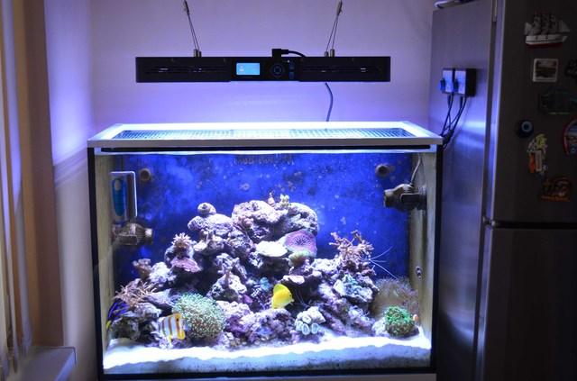 https://aquariumbg.com/forum/proxy.php?request=http%3A%2F%2Fs14.postimg.cc%2F9uhf2ltxt%2FDSC_06501.jpg&hash=fe1dce79ffc830b793cd70bb2f434d393d6066c3