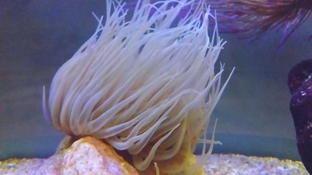 https://aquariumbg.com/forum/proxy.php?request=http%3A%2F%2Fs14.postimg.cc%2Fk0jquodrl%2FDSC_01501.jpg&hash=5b5af549725a52abf1c8d644b379f6e3a5ba7a79