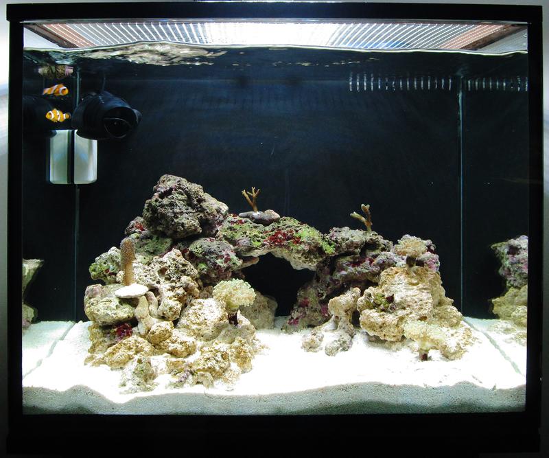 https://aquariumbg.com/forum/proxy.php?request=http%3A%2F%2Fs2.postimg.cc%2F8p6dzy8c9%2Fimage.jpg&hash=1142e38cac2af72d7845c3bd712dbc38b469f5f8