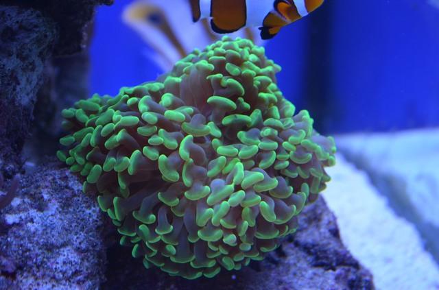 https://aquariumbg.com/forum/proxy.php?request=http%3A%2F%2Fs21.postimg.cc%2F53gki355z%2FDSC_0305.jpg&hash=b5599d6018b30c428b7001a5676c9e9cb47a0699