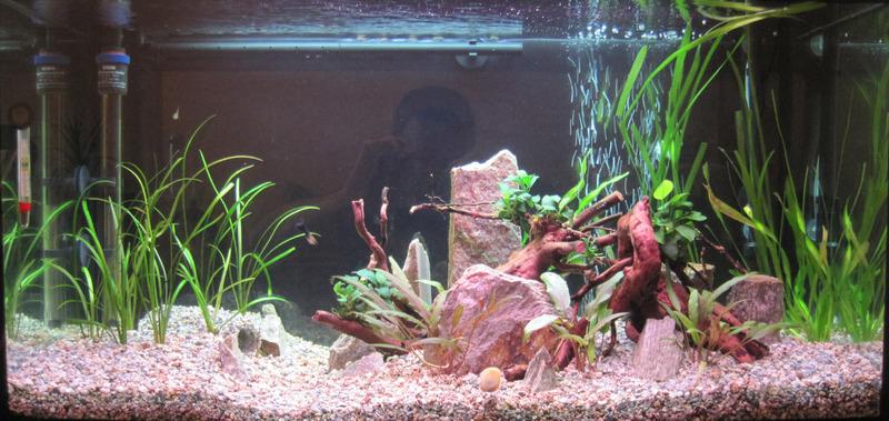 https://aquariumbg.com/forum/proxy.php?request=http%3A%2F%2Fs25.postimg.cc%2Fb3soata4v%2Fimage.jpg&hash=0748f720d07848fb38344abb88e37790fb2f1594