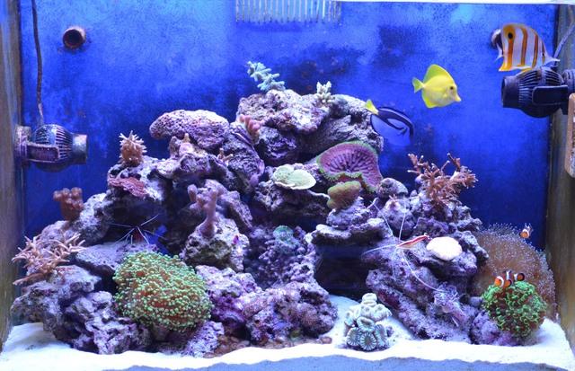 https://aquariumbg.com/forum/proxy.php?request=http%3A%2F%2Fs29.postimg.cc%2Fn69d6gtvr%2FDSC_0593new.jpg&hash=22c1b2172210a6e90c7a4b1d7a17e3c431aa1128