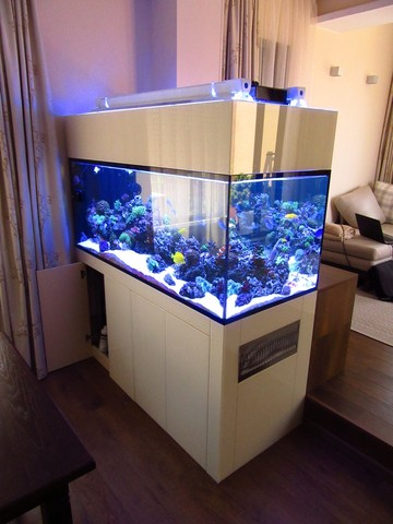 https://aquariumbg.com/forum/proxy.php?request=http%3A%2F%2Fs31.postimg.cc%2F4awsz9raz%2FIMG_0337_Large.jpg&hash=a75be479c62a522c3020aaad40d138a8133b7d6f