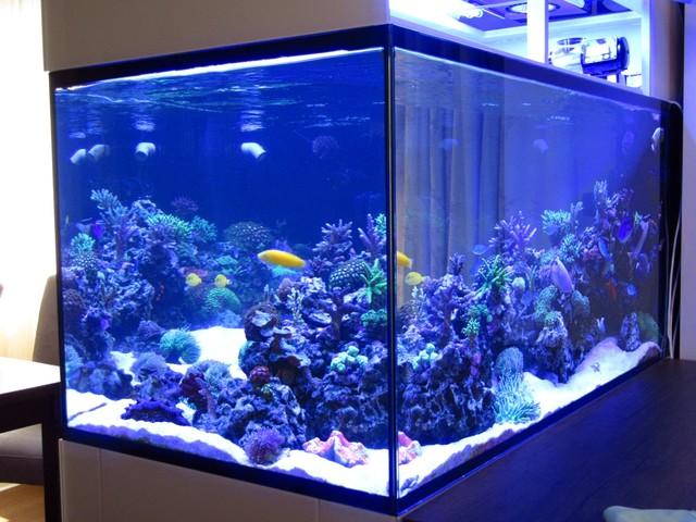 https://aquariumbg.com/forum/proxy.php?request=http%3A%2F%2Fs31.postimg.cc%2F55dvscoe3%2FIMG_0378_Large.jpg&hash=52a722425ce2638881950e6313c702c173c9d72d