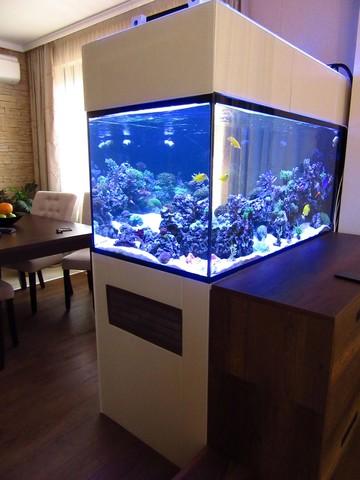 https://aquariumbg.com/forum/proxy.php?request=http%3A%2F%2Fs31.postimg.cc%2F85mewm6bf%2FIMG_0334_Large.jpg&hash=ee705a68eb14c9d5175ab72f3030c7a763923203