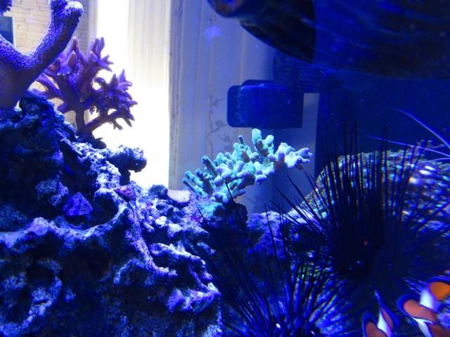 https://aquariumbg.com/forum/proxy.php?request=http%3A%2F%2Fs31.postimg.cc%2Fijumzdmkb%2FIMG_0369_Large.jpg&hash=fb2ce6447b536629509b3bd718b326fa622b36cc
