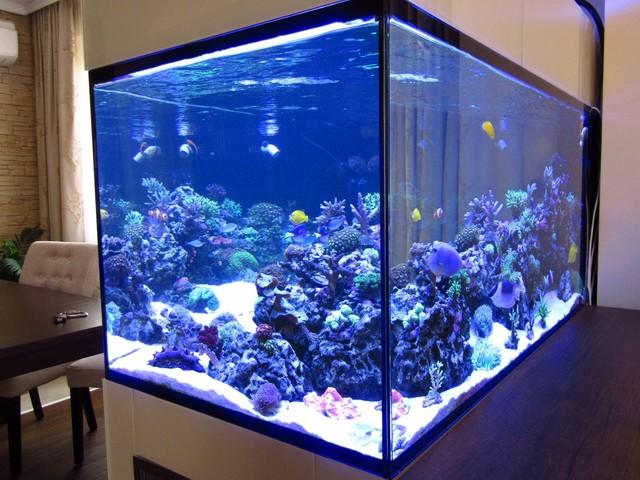 https://aquariumbg.com/forum/proxy.php?request=http%3A%2F%2Fs31.postimg.cc%2Fp4s77sjgb%2FIMG_0350_Large.jpg&hash=cfb85c9bcb1a3c2afab9fe97a84051948cee97bc