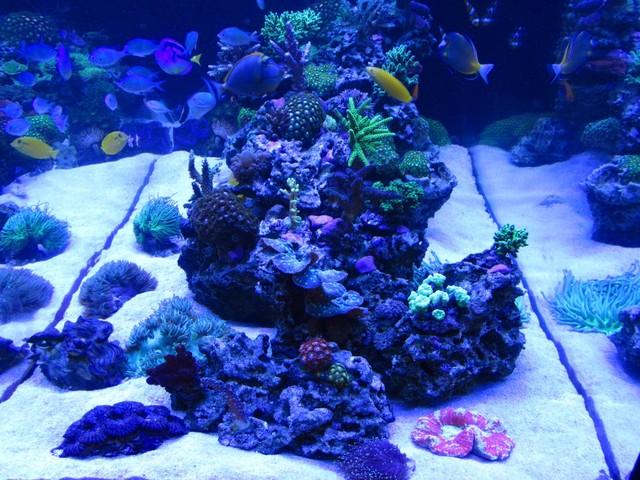 https://aquariumbg.com/forum/proxy.php?request=http%3A%2F%2Fs31.postimg.cc%2Fr5l1hhsaj%2FIMG_0377_Large.jpg&hash=9cd5a1a62f702b34c5166d07715ae75079c40b77
