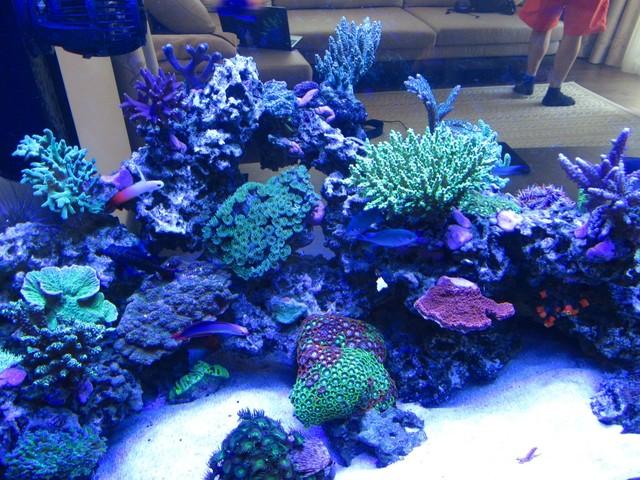 https://aquariumbg.com/forum/proxy.php?request=http%3A%2F%2Fs31.postimg.cc%2Ftmohchit7%2FIMG_0340_Large.jpg&hash=ae64d1a894f642565e4914c219d3585a3010531b