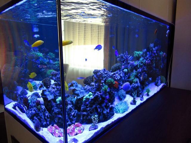 https://aquariumbg.com/forum/proxy.php?request=http%3A%2F%2Fs31.postimg.cc%2Fuuzjj6gzf%2FIMG_0346_Large.jpg&hash=bf1155077da7ca4535140383b1dcbf1bcd51140d