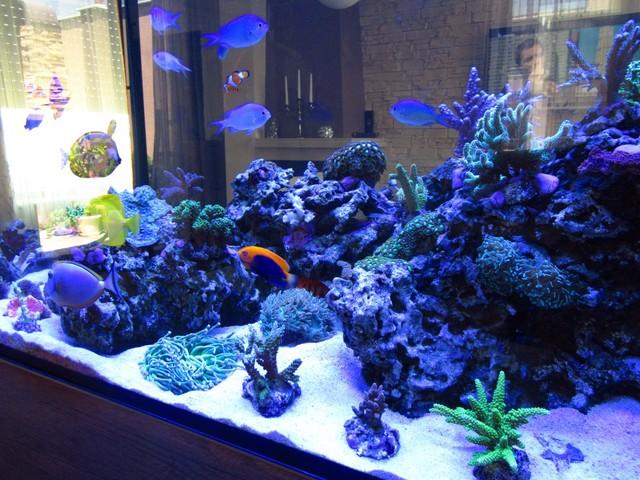 https://aquariumbg.com/forum/proxy.php?request=http%3A%2F%2Fs32.postimg.cc%2Ff3hw5o8id%2FIMG_0353_Large.jpg&hash=85cd339697cbaf8a8cdb1f002917fff6b77b60f1