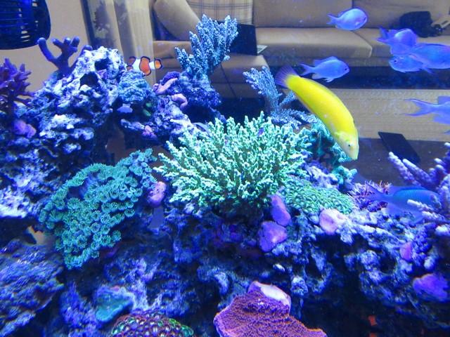 https://aquariumbg.com/forum/proxy.php?request=http%3A%2F%2Fs32.postimg.cc%2Fi7dcnktud%2FIMG_0339_Large.jpg&hash=5bc986fa221d263d7c6f15940caaf3f6aaf940af