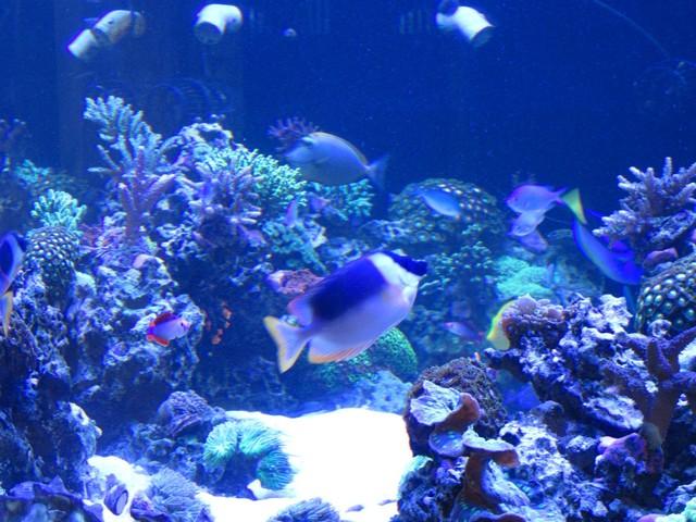 https://aquariumbg.com/forum/proxy.php?request=http%3A%2F%2Fs32.postimg.cc%2Fikeunzor9%2FIMG_0347_Large.jpg&hash=125eed267dbe75e8999f89de7aa029d960db7b3b