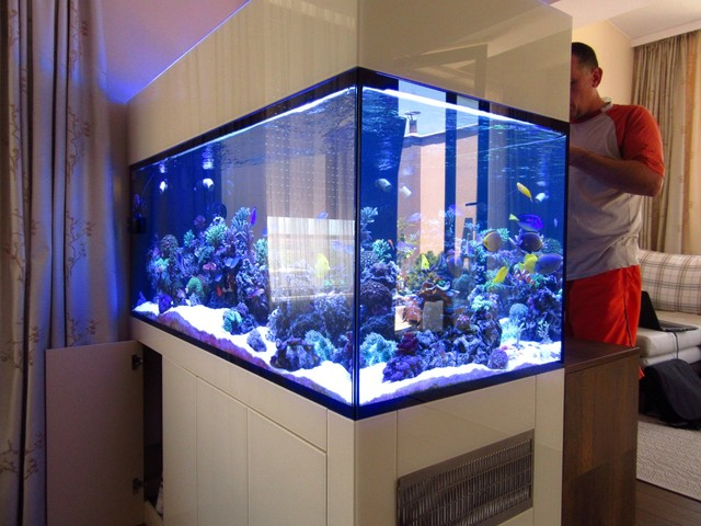 https://aquariumbg.com/forum/proxy.php?request=http%3A%2F%2Fs32.postimg.cc%2Fjn2tbrbpx%2FIMG_0344_Large.jpg&hash=5878349a08fb5472c427f471b323a2aa8b5af357