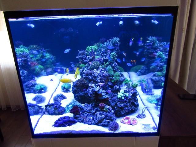 https://aquariumbg.com/forum/proxy.php?request=http%3A%2F%2Fs32.postimg.cc%2Fuld5r72fp%2FIMG_0335_Large.jpg&hash=6e87e34f9754d5c46aaddfbd4661d69e91fb7a06