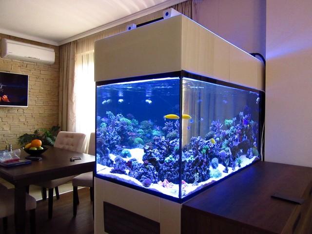 https://aquariumbg.com/forum/proxy.php?request=http%3A%2F%2Fs32.postimg.cc%2Furcm5oqhh%2FIMG_0333_Large.jpg&hash=37b3503d6af8de8145b5cc93aca595aeba579408