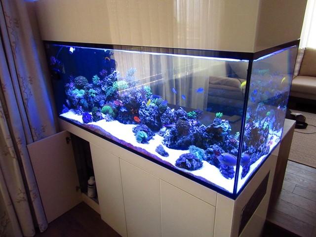 https://aquariumbg.com/forum/proxy.php?request=http%3A%2F%2Fs32.postimg.cc%2Fxxg1y8jkl%2FIMG_0336_Large.jpg&hash=0bd22c9ca0288c511d7bc2a3da7244dc6004c3ff