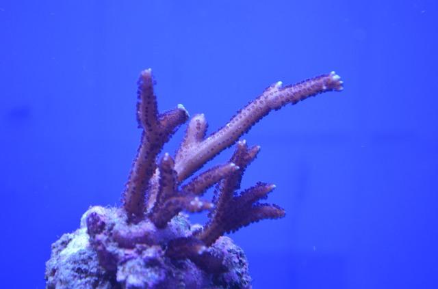 https://aquariumbg.com/forum/proxy.php?request=http%3A%2F%2Fs9.postimg.cc%2F7g2uxyehr%2FDSC_0301.jpg&hash=f36fb62a8467e958179531709822e347137f86c0