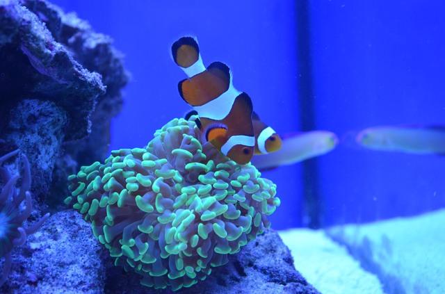 https://aquariumbg.com/forum/proxy.php?request=http%3A%2F%2Fs9.postimg.cc%2Fogqckdgwv%2FDSC_0336.jpg&hash=c7fb19ed37098e6ce36a8c684bea5544c59969ed