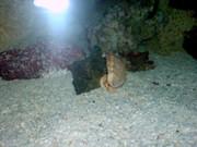 https://aquariumbg.com/forum/proxy.php?request=http%3A%2F%2Fwww.postimage.org%2FPqgXvhA.jpg&hash=70ecf9165c32963291ba04763a517d7829573b8c