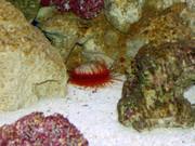 https://aquariumbg.com/forum/proxy.php?request=http%3A%2F%2Fwww.postimage.org%2FaV1XBGTJ.jpg&hash=f9aa1a8cd58db3e7c35066fa57360d61838e80a9