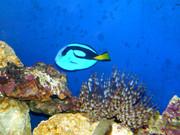 https://aquariumbg.com/forum/proxy.php?request=http%3A%2F%2Fwww.postimage.org%2FaV1XCDL9.jpg&hash=3da02712f5ad6473e0539cd9f9a854b9f0bdabd0
