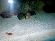 https://aquariumbg.com/forum/proxy.php?request=http%3A%2F%2Fwww.postimage.org%2FaVFfgLi.jpg&hash=8277ff79e0c0ac084085828b16c5104679fdf6ef