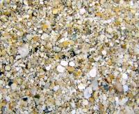Florida Live Sand