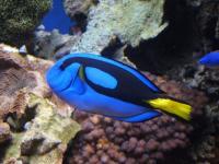 Голям бариерен риф