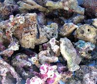 Nano Live Rock  - Жив камък за nano reef